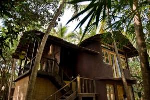 mango-tree house 2